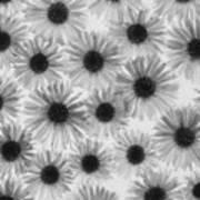 Chrysanthemum Flowers Print by Graeme Harris