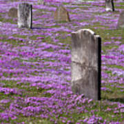 Colonial Tombstones Amidst Graveyard Phlox Print by John Stephens