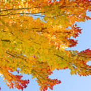 Colorful Autumn Reaching Out Print by James BO  Insogna