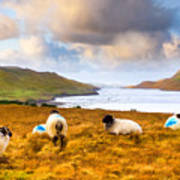 Connemara Sheep Grazing Over Killary Fjord Print by Mark E Tisdale