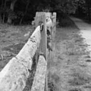 County Fence  Print by D R TeesT