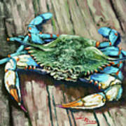 Crabby Blue Print by Dianne Parks