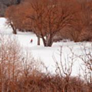 Crosscountry Skier Print by Utah Images