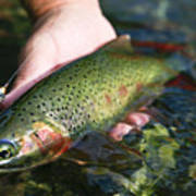 Cutthroat Trout On The Middle Fork Print by Drew Rush
