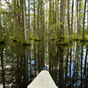 Cypress Garden Swamp Print by Dustin K Ryan