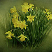 Daffodils Print by Sandy Keeton