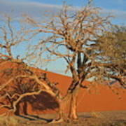 Desert Beauty Print by Joe  Burns