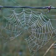 Dew On The Web Print by Douglas Barnett
