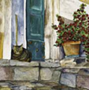 Di Gatto Print by Barb Pearson