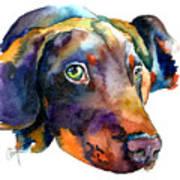 Doberman Watercolor Print by Christy  Freeman