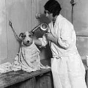Dog Salon Print by Fox Photos