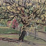 Dogwood Print by Donald Maier