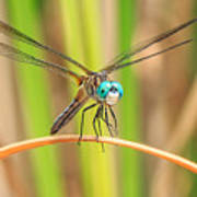 Dragonfly Print by Everet Regal