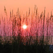 Dune Grass Sunset Print by Bill Cannon
