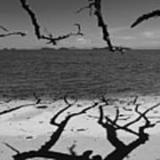 Dunk Island Australia 172 Print by Per Lidvall