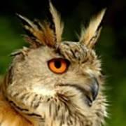 Eagle Owl Print by Jacky Gerritsen