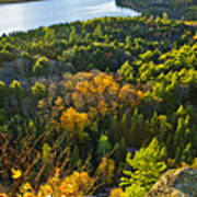 Fall Forest And Lake Top View Print by Elena Elisseeva