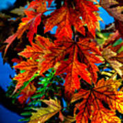 Fall Reds Print by Robert Bales