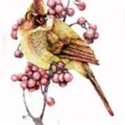 Female Cardinal Print by Preston Shupp
