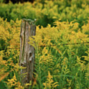 Fence Post7139 Print by Michael Peychich