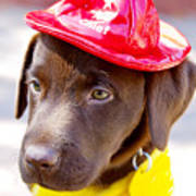 Firefighter Pup Print by Toni Hopper