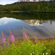 Fireweed Reflections Print by Mike  Dawson