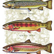 Five Trout Panel Print by JQ Licensing