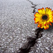 Flower In Asphalt Print by Carlos Caetano