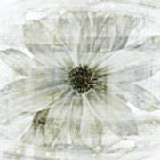 Flower Reflection Print by Frank Tschakert