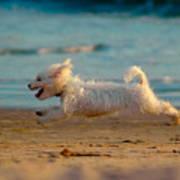Flying Dog Print by Harry Spitz