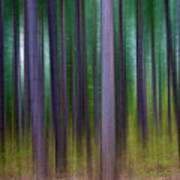 Forest Abstract02 Print by Svetlana Sewell