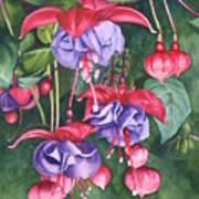 Fuchsia Trio Print by Tina  Sander
