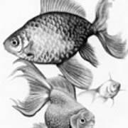 Goldfish Print by Sarah Batalka