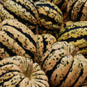 Gourds In White And Green Print by Jame Hayes