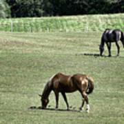 Grazing Horses Print by John Greim