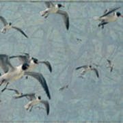 Gulls Print by James W Johnson