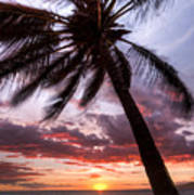 Hawaiian Coconut Palm Sunset Print by Dustin K Ryan