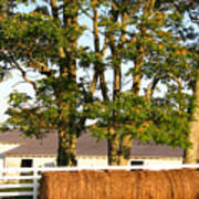 Hay Bales And Trees Print by Todd A Blanchard
