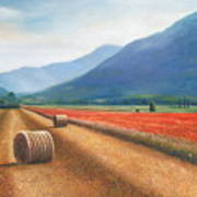 Haybales In Italy Print by Ann  Cockerill
