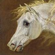 Head Of A Grey Arabian Horse  Print by Martin Theodore Ward