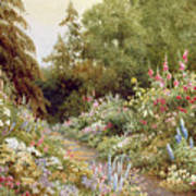 Herbaceous Border  Print by Evelyn L Engleheart