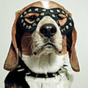 Hound In Black Mask Print by Darren Boucher