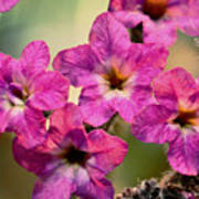 Irridescent Pink Flowers Print by Ryan Kelly