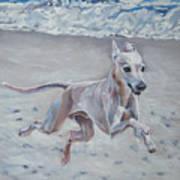 Italian Greyhound On The Beach Print by Lee Ann Shepard