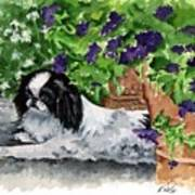Japanese Chin Puppy And Petunias Print by Kathleen Sepulveda