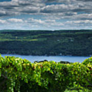 Keuka Vineyard I Print by Steven Ainsworth