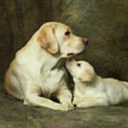 Labrador Dog Breed With Her Puppy Print by Sergey Ryumin