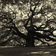 Last Angel Oak 72 Print by Susanne Van Hulst