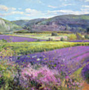 Lavender Fields In Old Provence Print by Timothy Easton