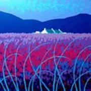 Lavender Scape Print by John  Nolan